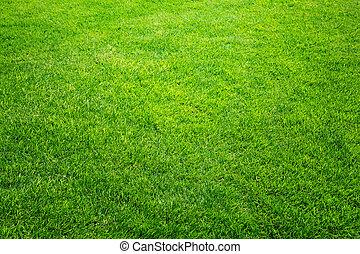 fresco, primavera, hierba verde, natural, plano de fondo, textura