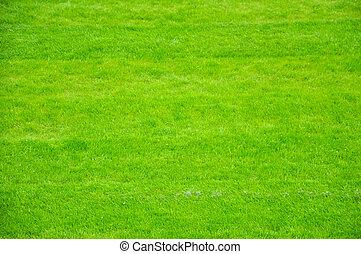 fresco, primavera, hierba verde, plano de fondo