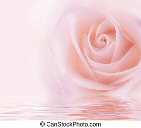 fresco, rosa