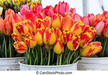 fresco, tulipanes, en la exhibición