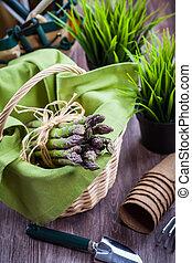 fresco, verde, espárrago, con, herramientas de jardín