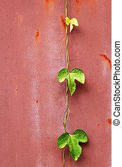 fresco, verde, hera, folha, ligado, a, wall.