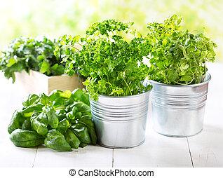 fresco, verde, hierbas