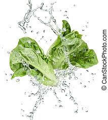 frescor, de, legumes