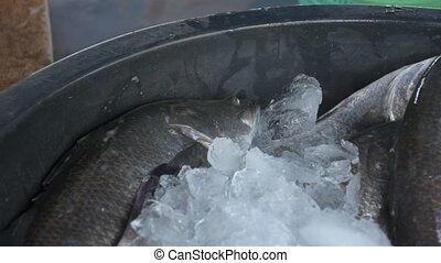 Fresh alive fish from a sea soak in ice at morning seafood...