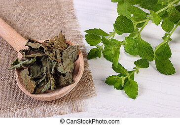 Fresh and dried lemon balm with spoon on white wooden table...
