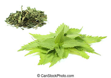 Fresh and dried nettle on white background - Closeup of...