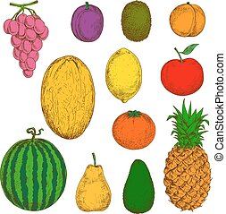 Fresh and juicy fruits for food and drinks design - Sunny...