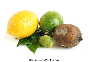 Fresh and moldy dried lemons and lime with green leaves on a...