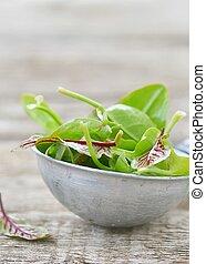 fresh and organic sorrel leaves