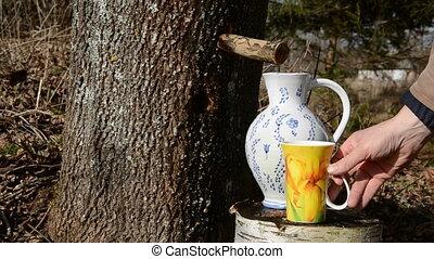 fresh and sweet maple sap