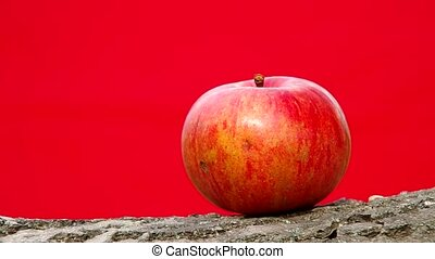 Fresh apple on a red background
