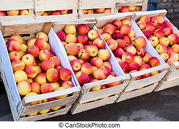 Fresh apples of new harvest ready to sale at the local farmers market