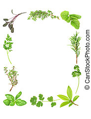 Herb leaf selection forming a border of fresh organic basil, silver thyme, flat leaved parsley, purple sage, common thyme, lemon balm, rosemary, curly parsley, bay and coriander. Starting bottom left in clockwise order. Over white background.