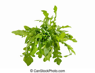 Fresh arugula isolated in a white background
