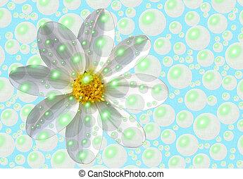 a fresh daisy behind bubbles