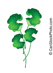 Fresh Asiatic Pennywort Plant on White Background