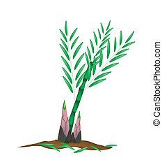 Fresh Bamboo Plant on A White Background