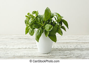 Fresh basil herb growing in white pot on a rustic wooden table for alternative medicine. Home garden on balcony for healthy cooking, herbs and spices. The concept of eco, healthy nutrition, environmental friendliness and zero waste.