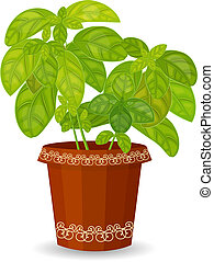 fresh basil herb in a flower pot