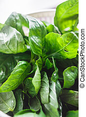 Fresh basil leaves in the dryer for greens.