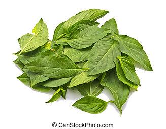 Fresh basil leaves on a white background