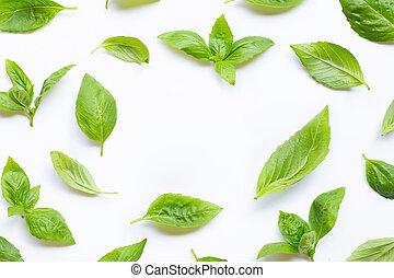 Fresh basil leaves on white.