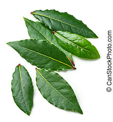 Fresh bay leaves - Bay leaves isolated on white background