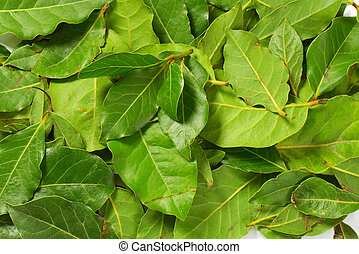 Fresh bay leaves - fresh bay leaves background