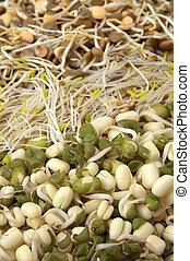 different fresh bean sprouts, vertical photo