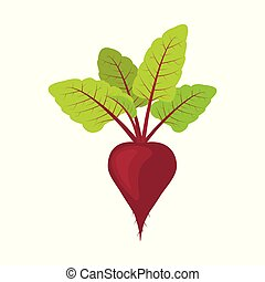Fresh beet with leaf. vegetarianism