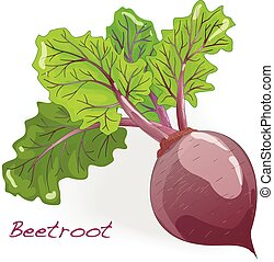 Fresh beetroot with leaves isolated.Vector.