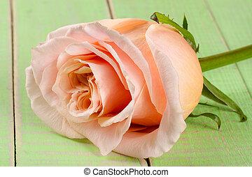 fresh beige rose on a green wooden background