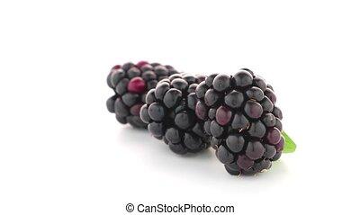 fresh berry blackberry - Fresh berry blackberry with green...