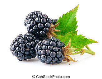 berry blackberry with green leaf