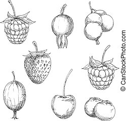 Fresh berry fruits sketches in engraving style