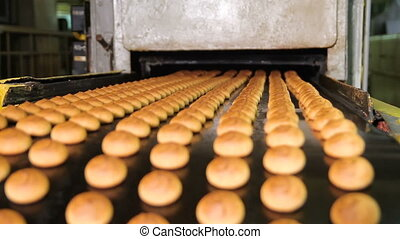 Fresh biscuits made in the factory