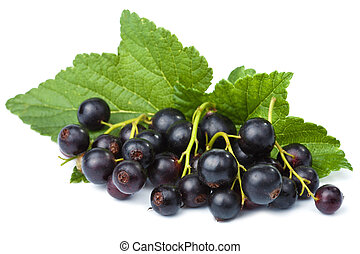fresh black currant isolated