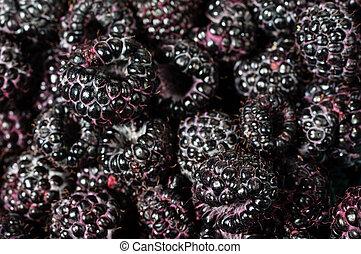 Fresh black raspberries in boxes