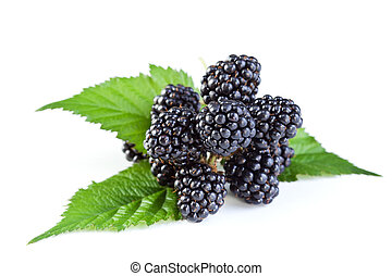 Fresh blackberry with green leaves - isolated
