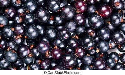 Fresh blackcurrants rotation background. Healthy eating, season harvest. Macro view.