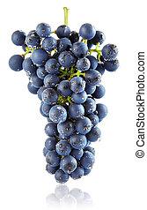 fresh blue grape cluster isolated fruit