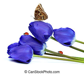 fresh blue tulips with butterfly