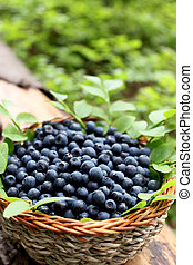 fresh blueberries in a basket - fresh blueberries placed in...