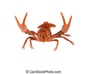 Fresh boiled red crayfish isolated on white background.