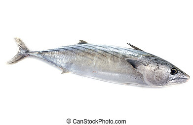fresh bonito in front of white background