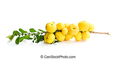 Fresh branch with quince fruits isolated on white