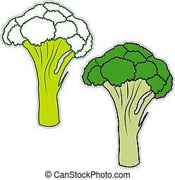 Fresh broccoli, illustration, vector on white background.