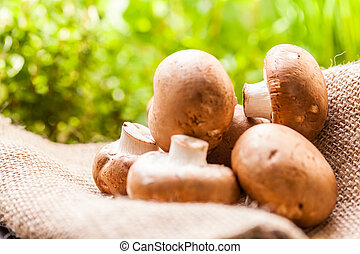 Fresh brown Agaricus mushrooms - Fresh brown whole uncooked...