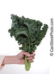 Hand holding a bunch of fresh, organic kale.